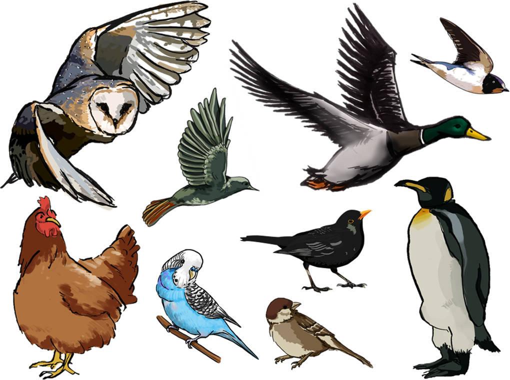 Vögel.jpg