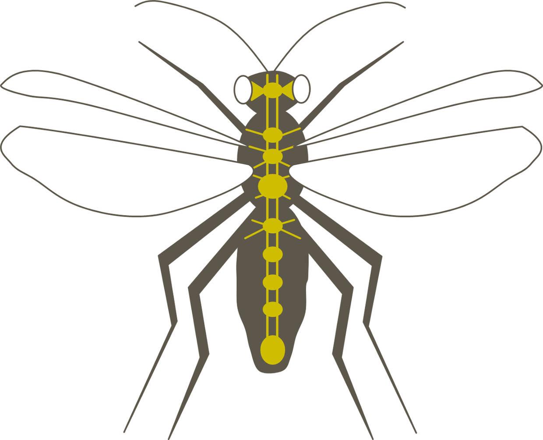 Partnersuche insekten