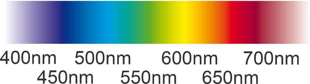 spektrum_(1).jpg