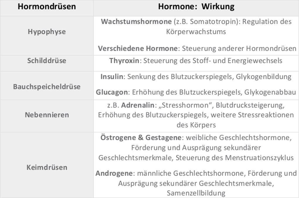 Hormondrüsen, Hormone und ihre Wirkung.jpg