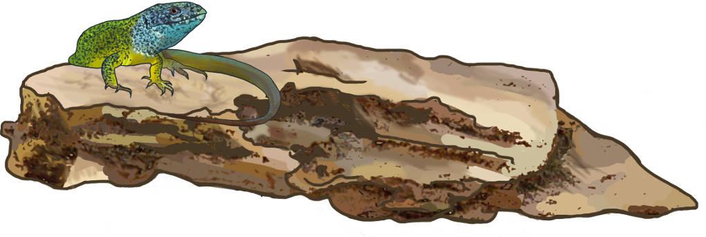 Reptil beim Sonnenbaden