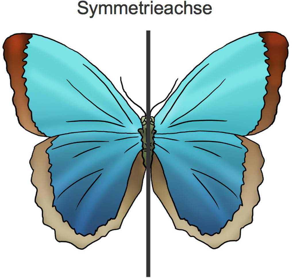 1099_Schmetterling.jpg