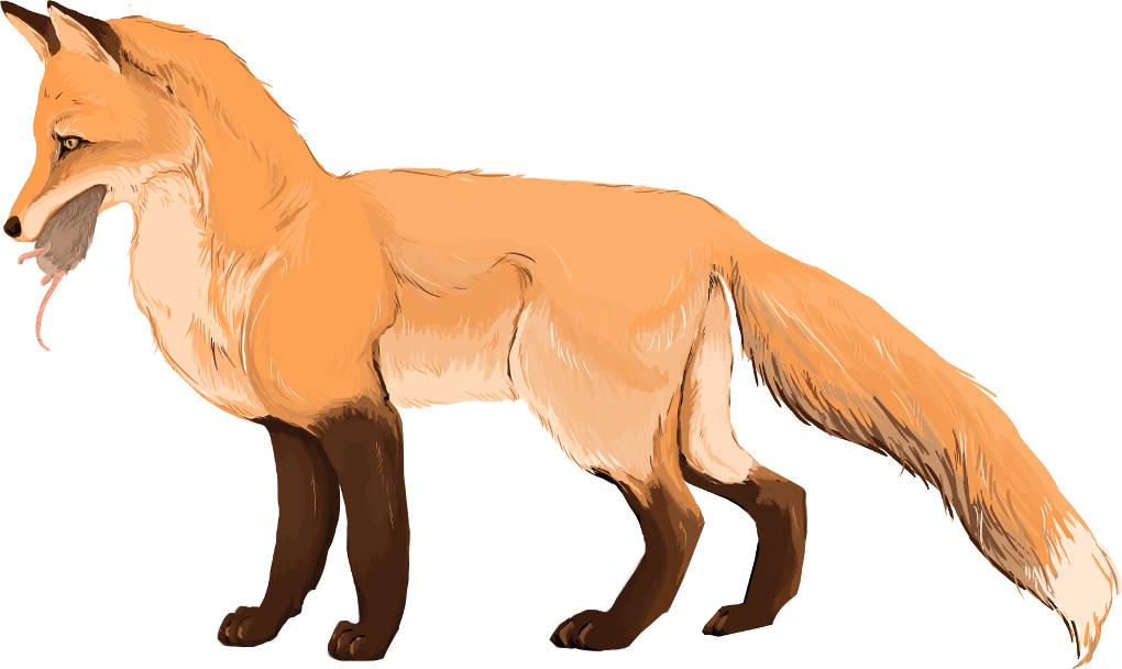 Fuchs erbeutet eine Maus.jpg