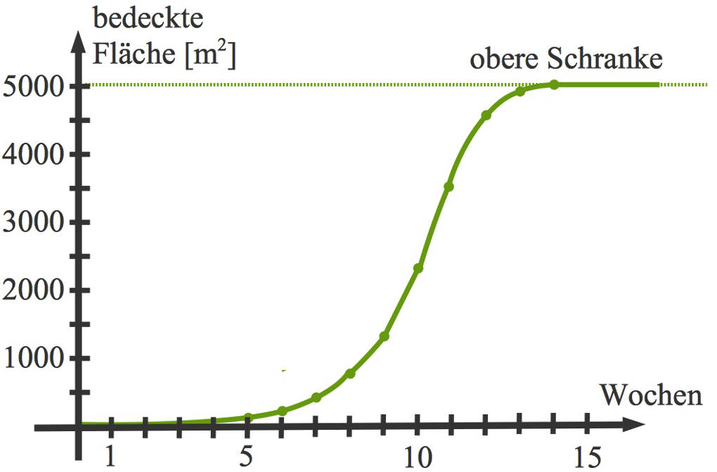 1005_log.Wachstum_Seerose_Grafik.jpg