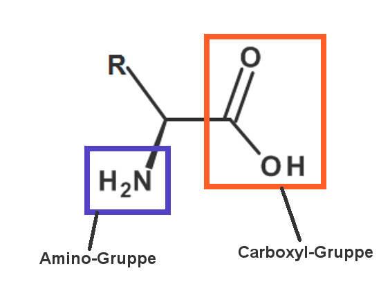 aminosäure.jpg