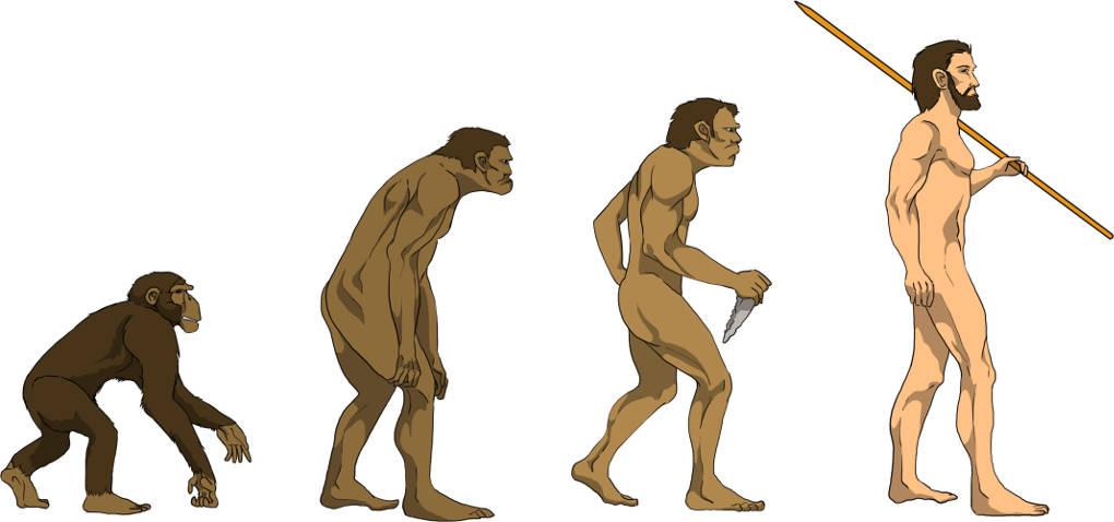 Evolutionsbiologie online lernen