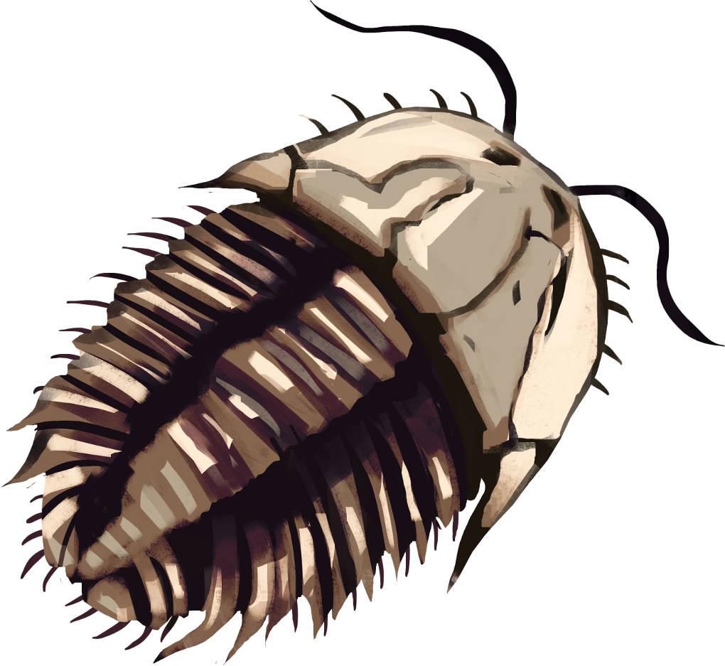 Trilobit.jpg
