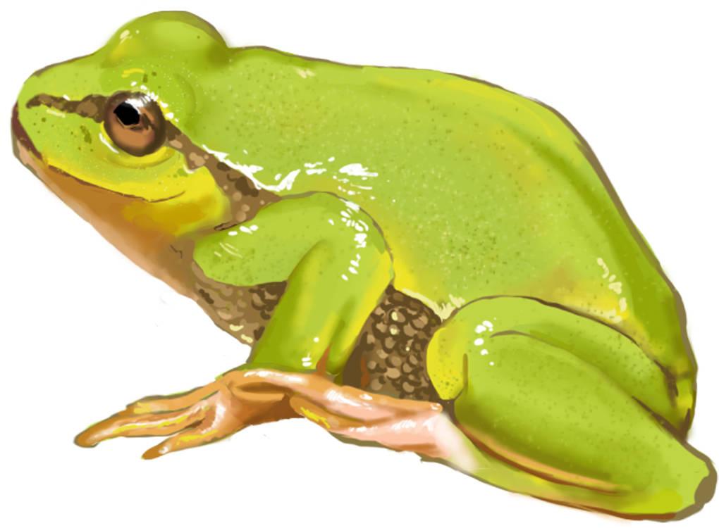 Frosch_(3).jpg