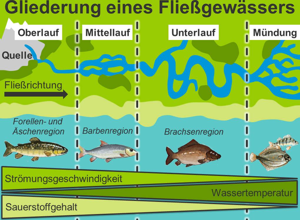 Gliederung_eines_Fließgewässers_beschriftet_farbig.jpg