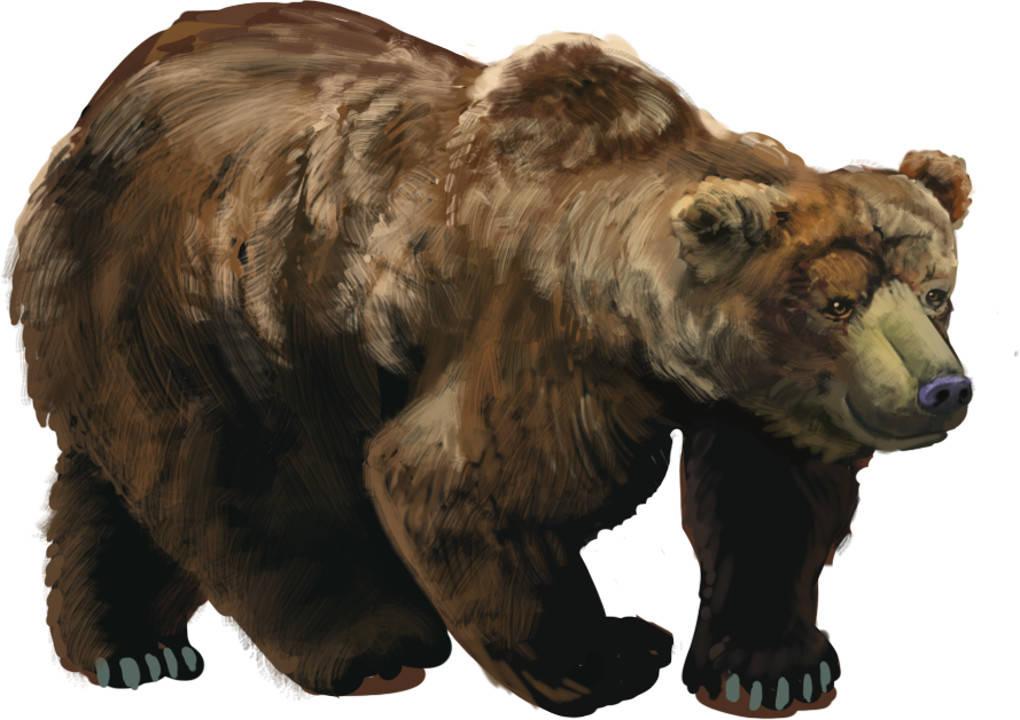Ungerichtetes Appetenzverhalten beim Bären.jpg