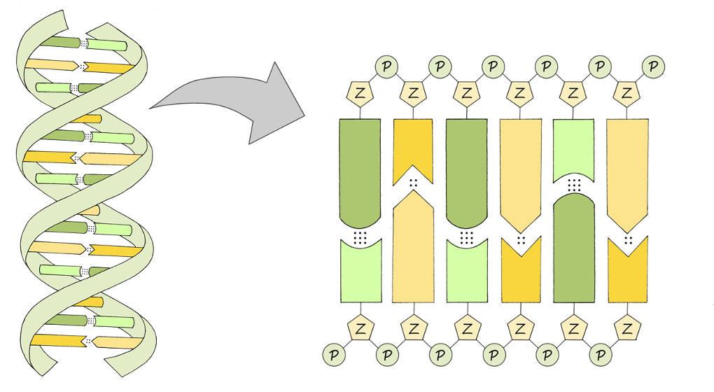 Genetik online lernen