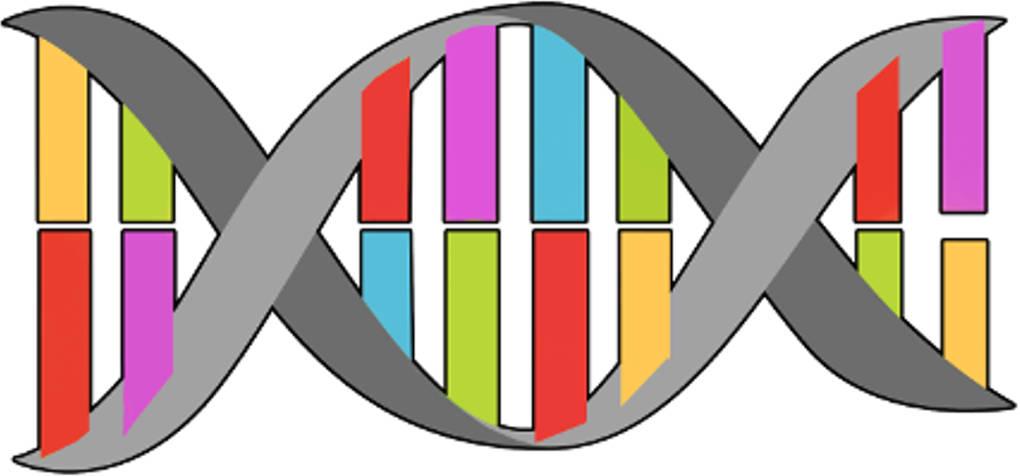 Erfreut Arbeitsblatt 21 DNA Replikation Zeitgenössisch ...
