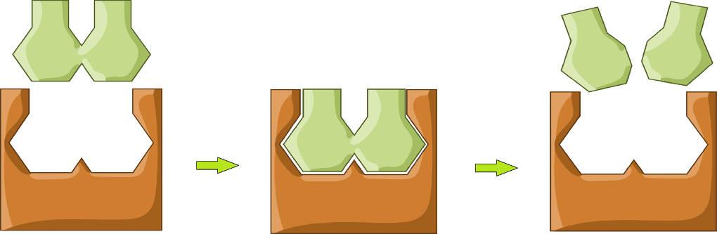 Enzym-Substrat-Komplex.jpg
