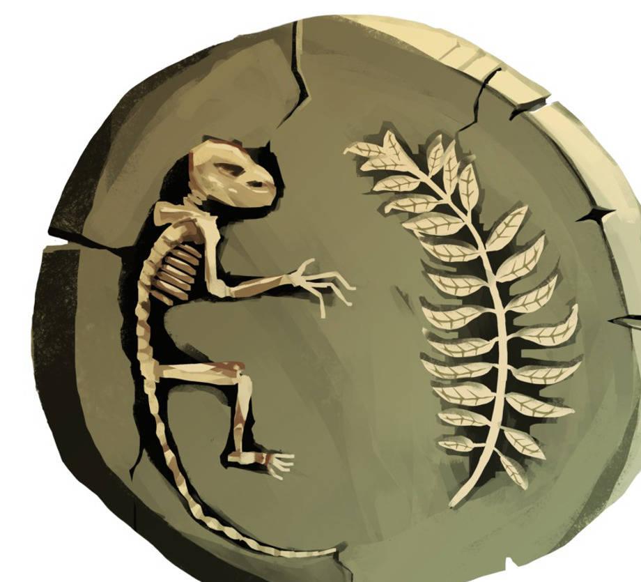 Fossil_Bild.jpg