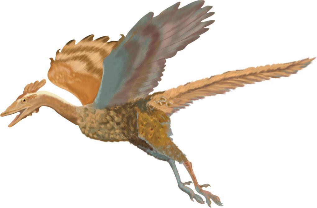 10_archaeopteryx.jpg