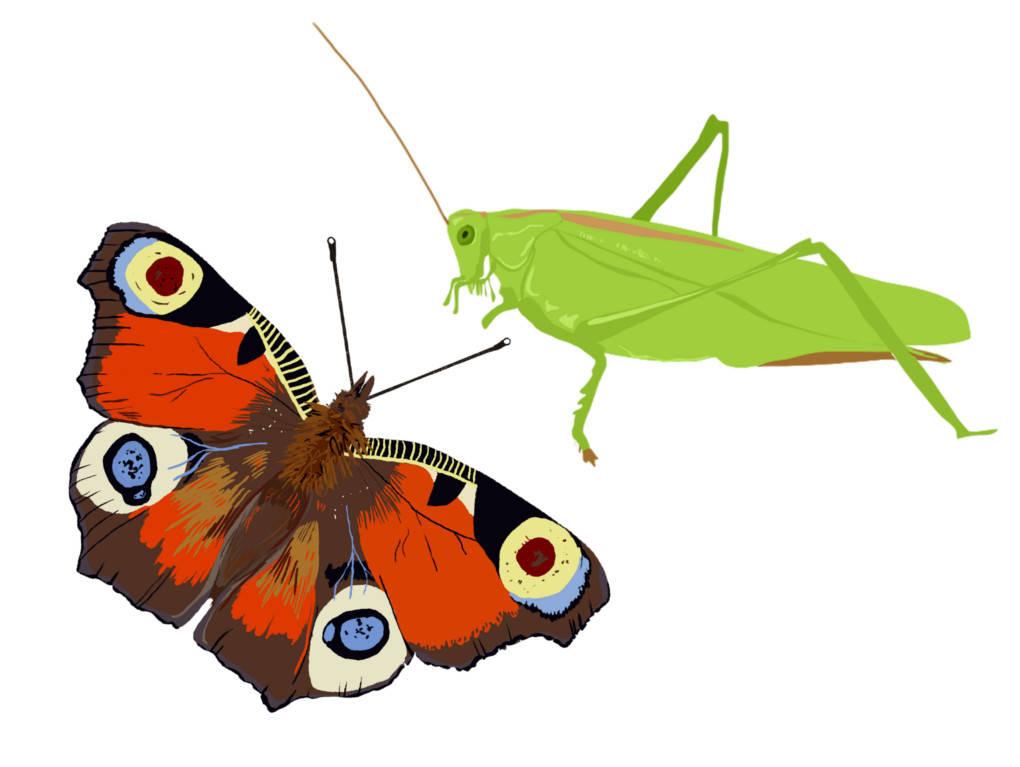 Insekten_Bild.jpg