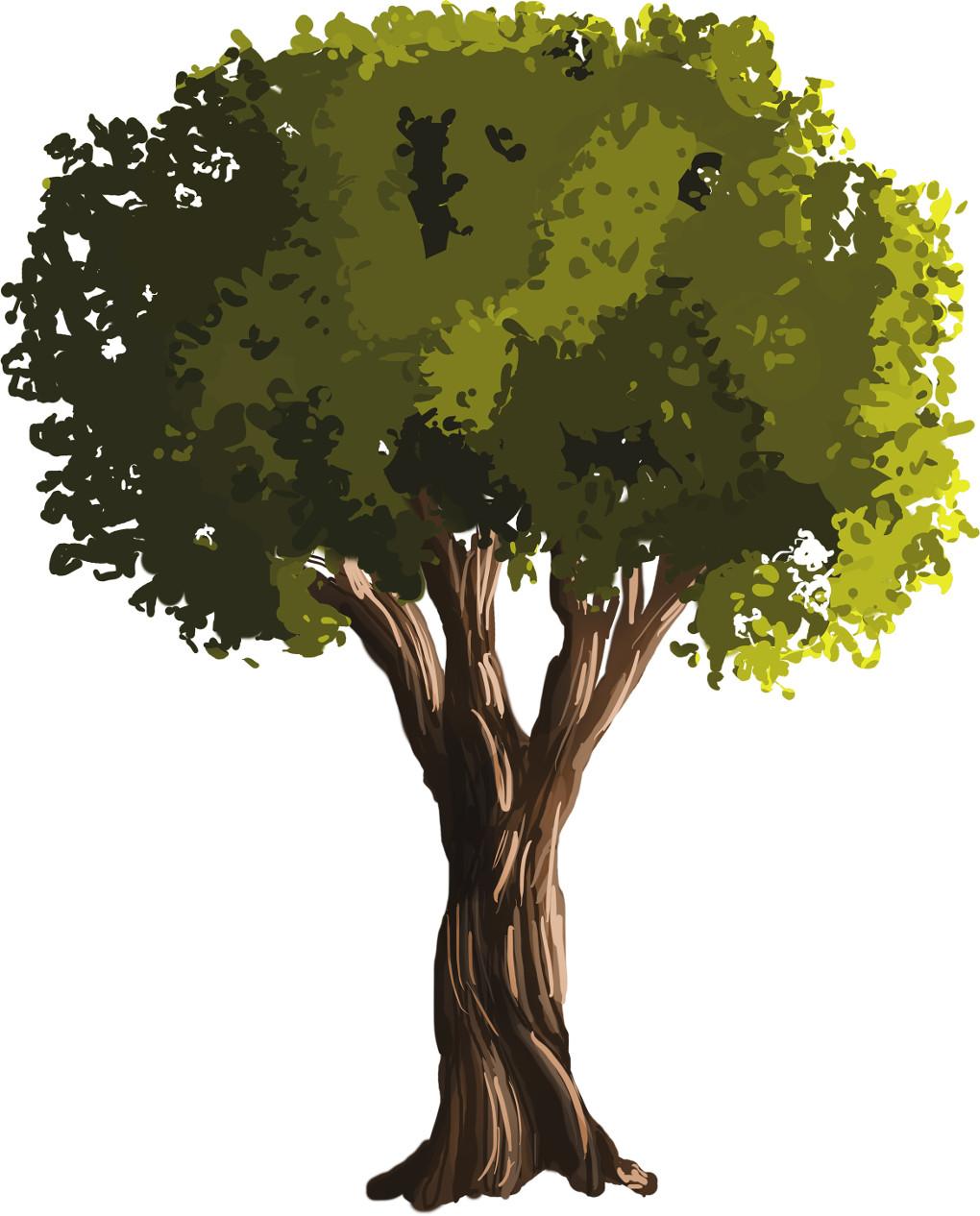 Baum.jpg