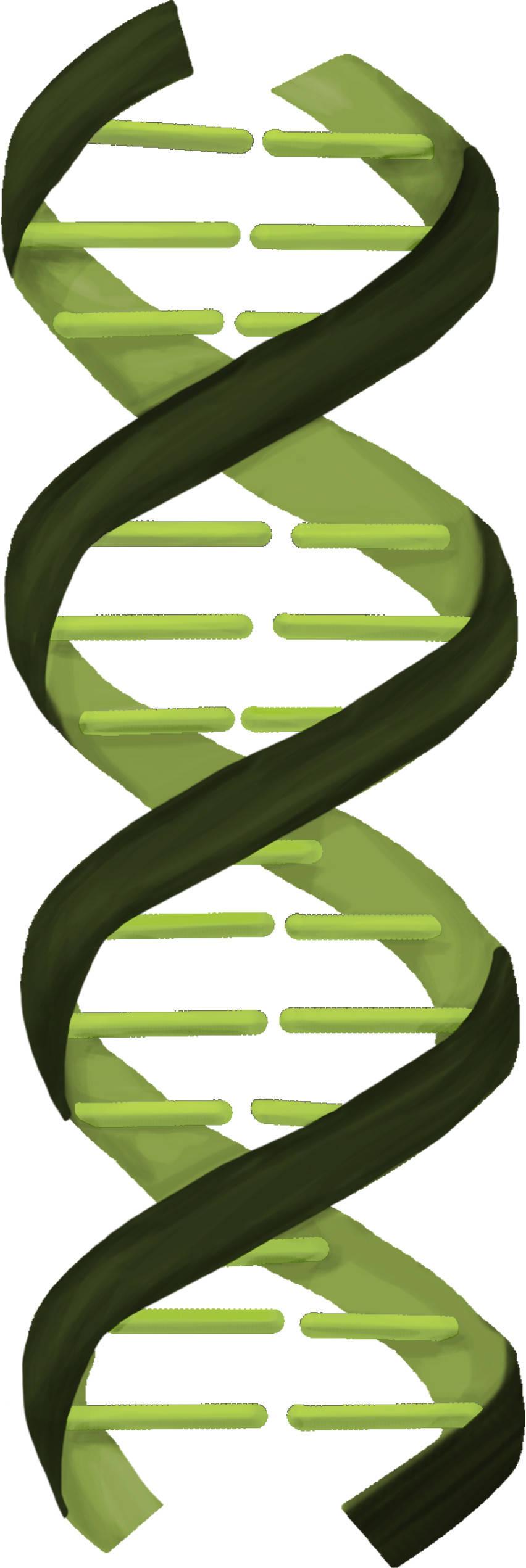 DNA und Molekulargenetik - Mittelstufe online lernen