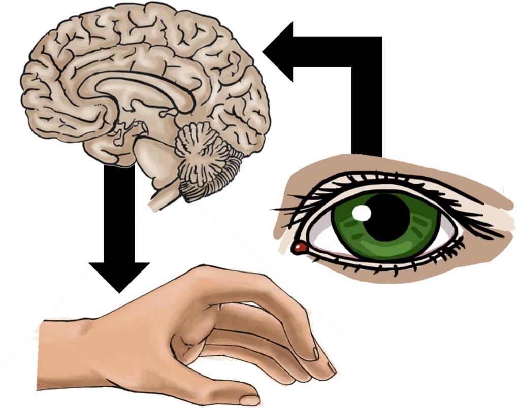 Informationsverarbeitung_Nervensystem.jpg