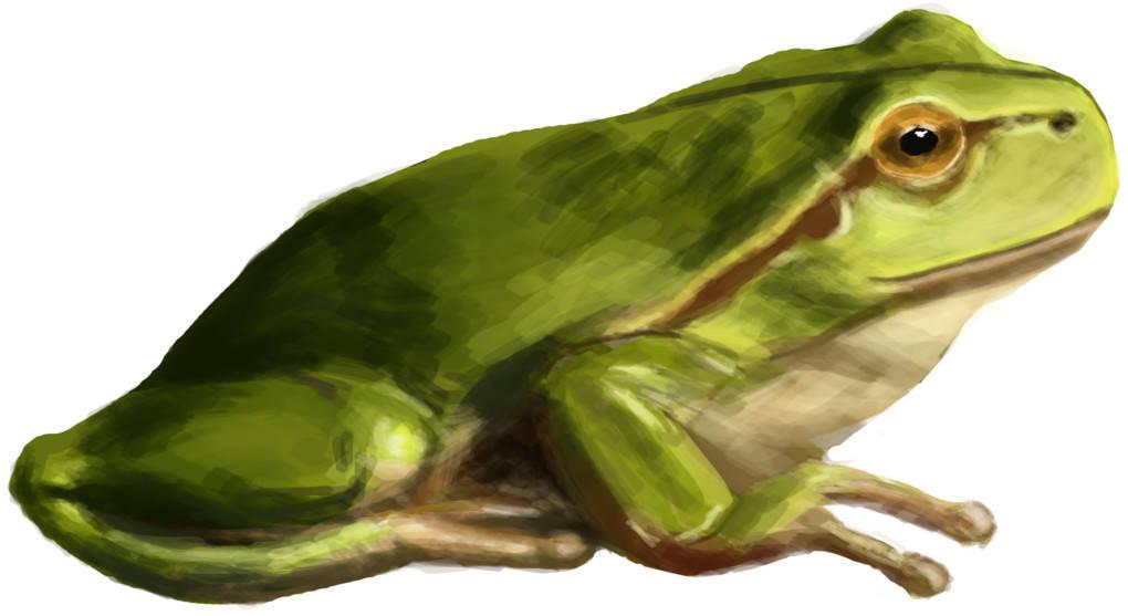 Froschk.jpg