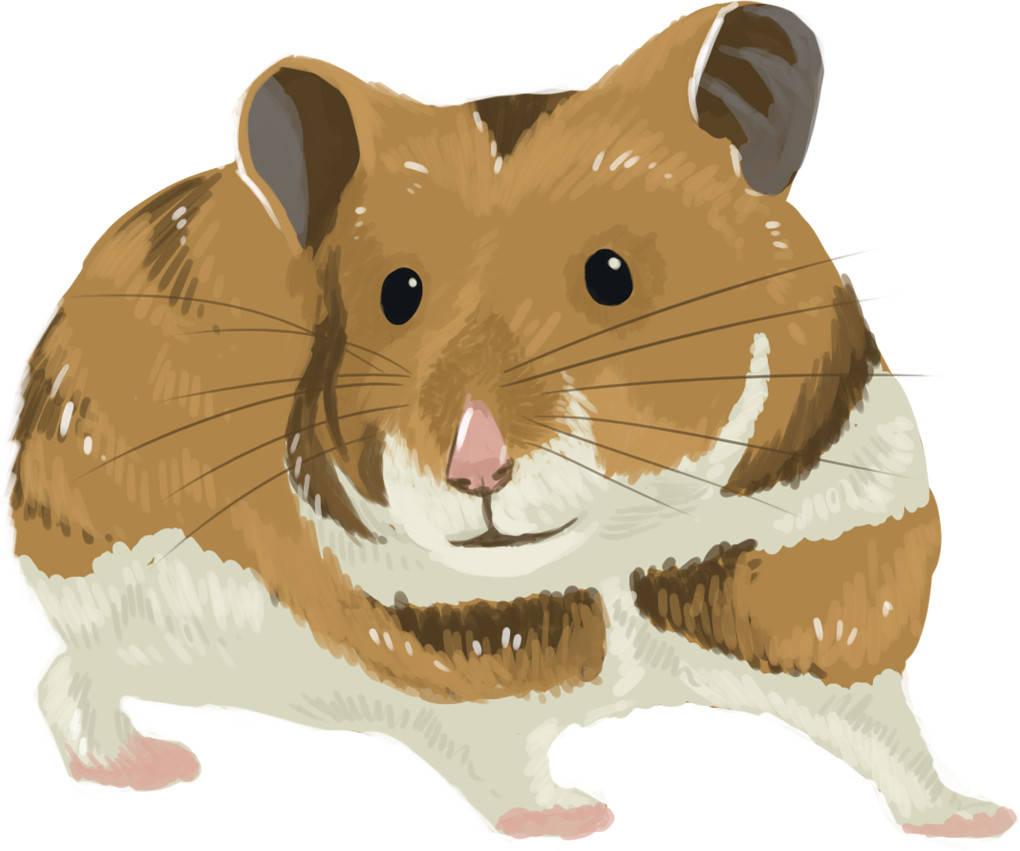 Hamster_(1).jpg