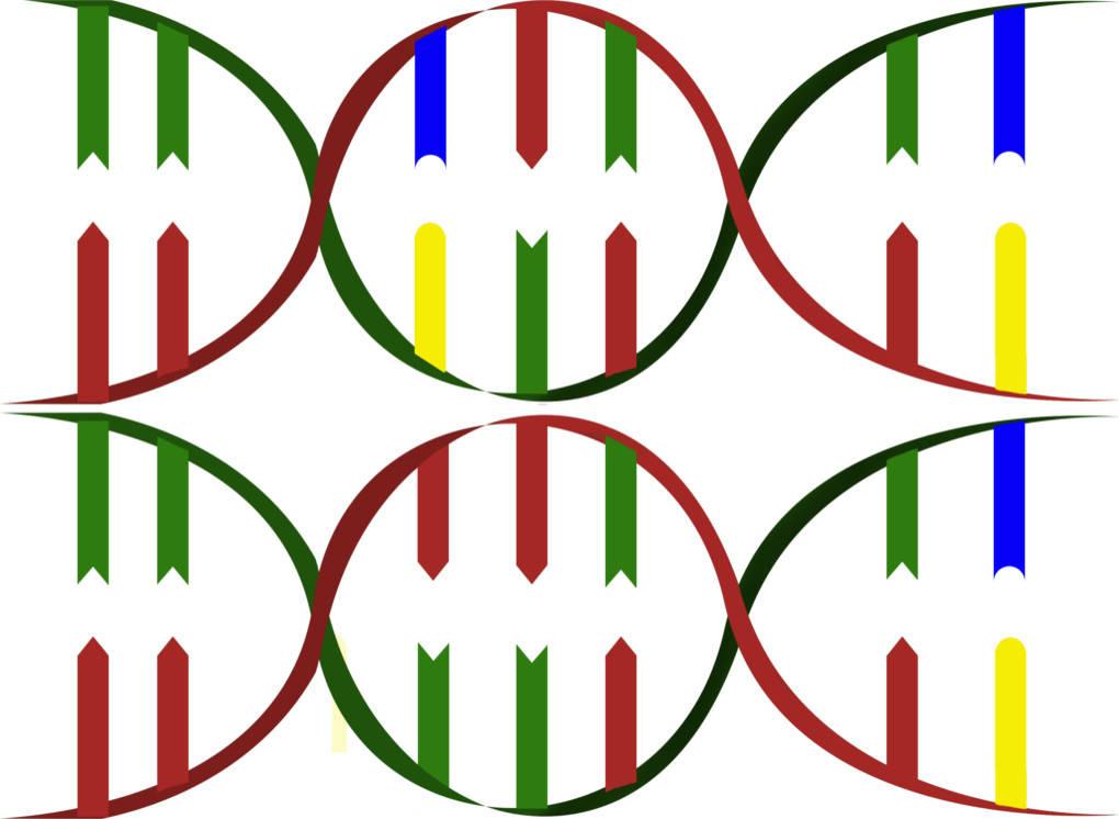 15_dna_mutation.jpg