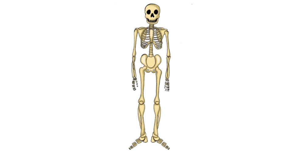 Skelett_Aufbau.jpg