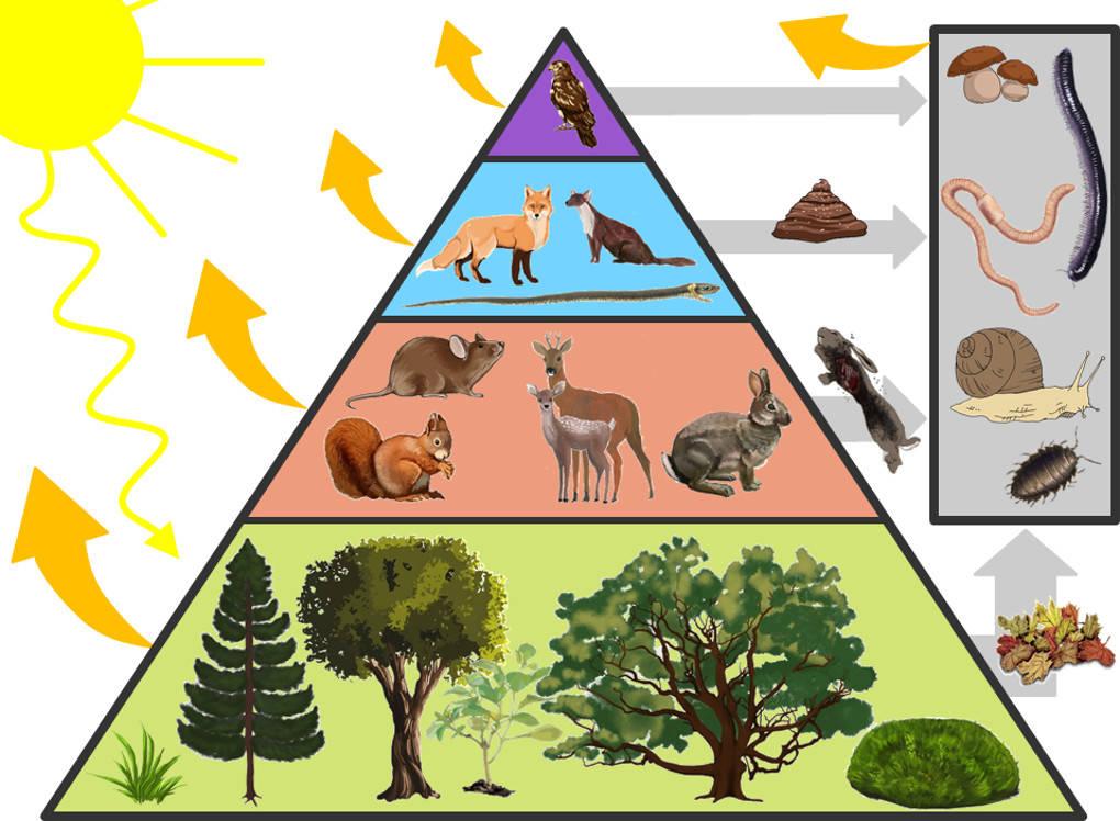 Energiepyramide.jpg