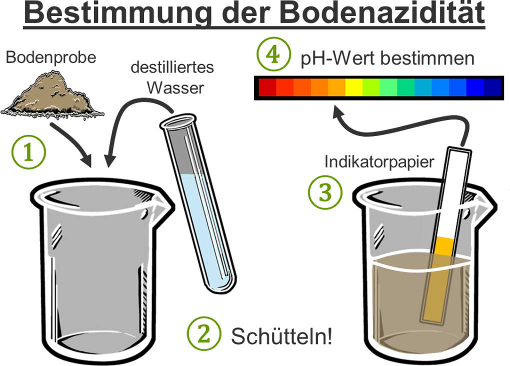 pH-Bestimmung.jpg