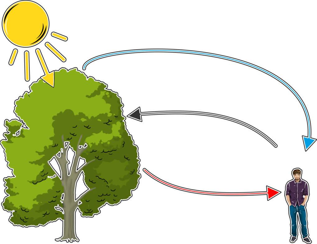 Kreislauf_Atmung_und_Fotosynthese.jpg