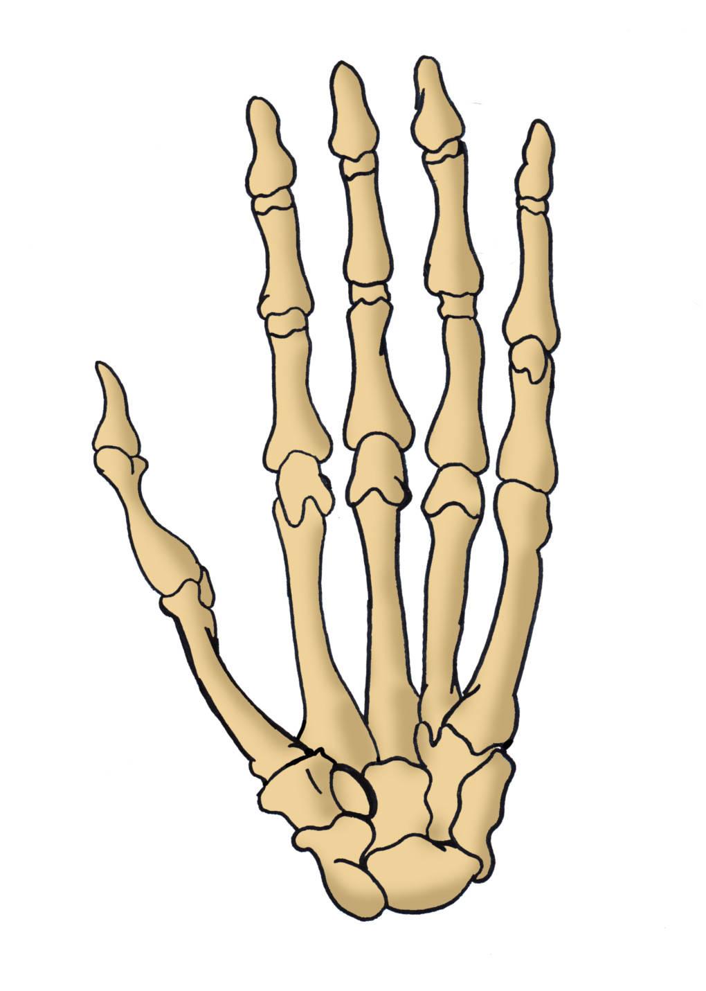 Knochenhand.jpg