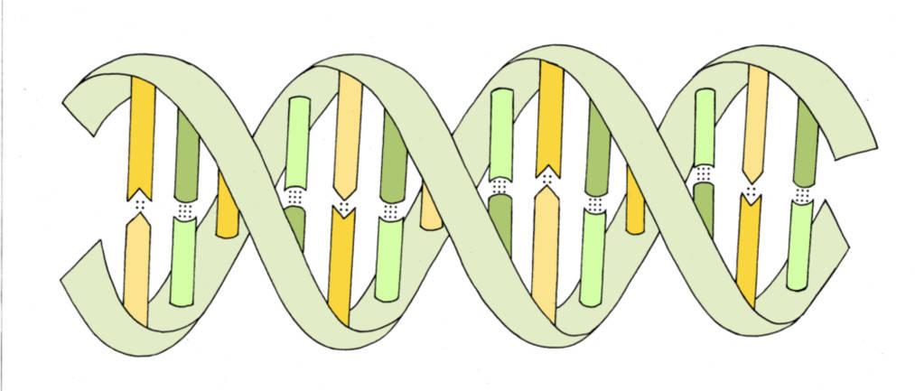 DNA und Molekulargenetik - Oberstufe online lernen