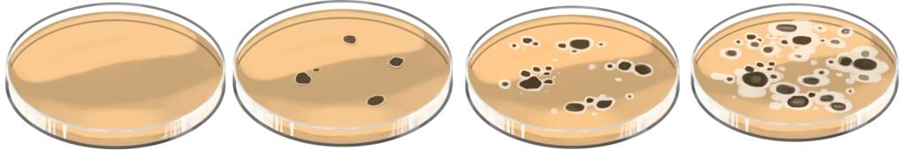 Bakterienwachstum auf Nährmedium mit Antibiotikum.jpg