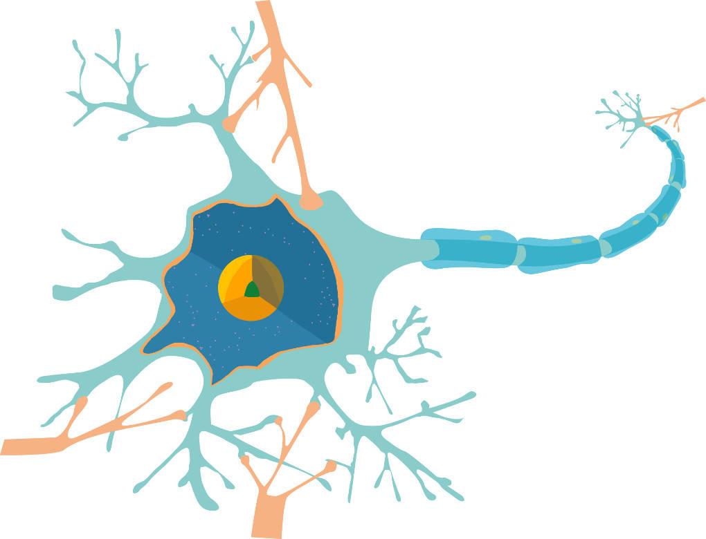Nervenzelle.jpg