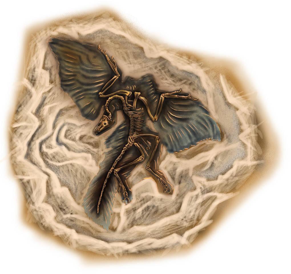 Fossil eines Archaeopteryx