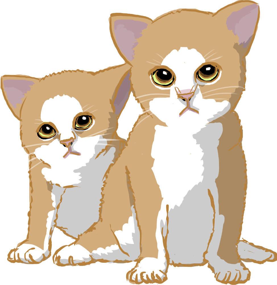 Katzenjungen.jpg