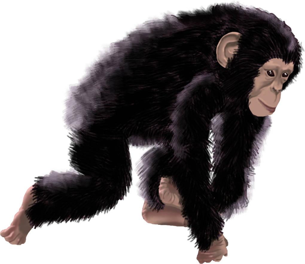 01_schimpanse.jpg