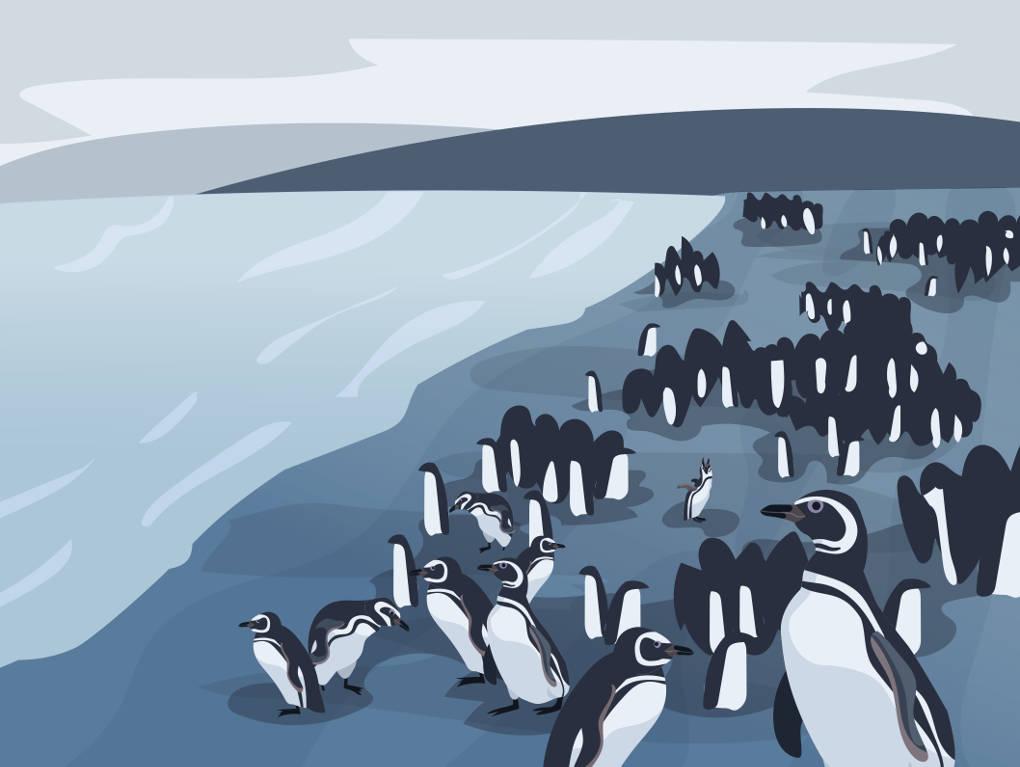20455_pinguin_menge.jpg
