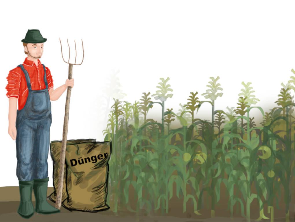 Landwirt mit Dünger und Maispflanzen