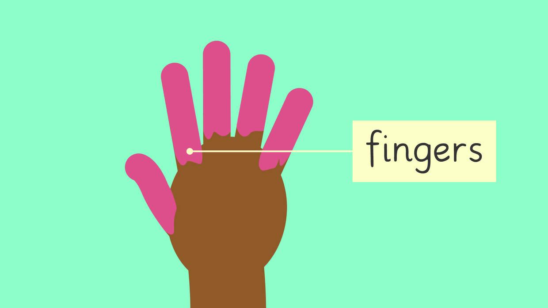 Vokabeln_Englisch_Grundschule_Fingers.jpg