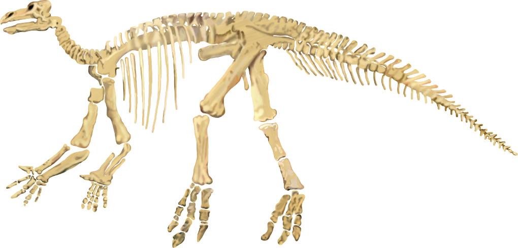 Radioaktiver Zerfall: Skelett eines Dinosauriers