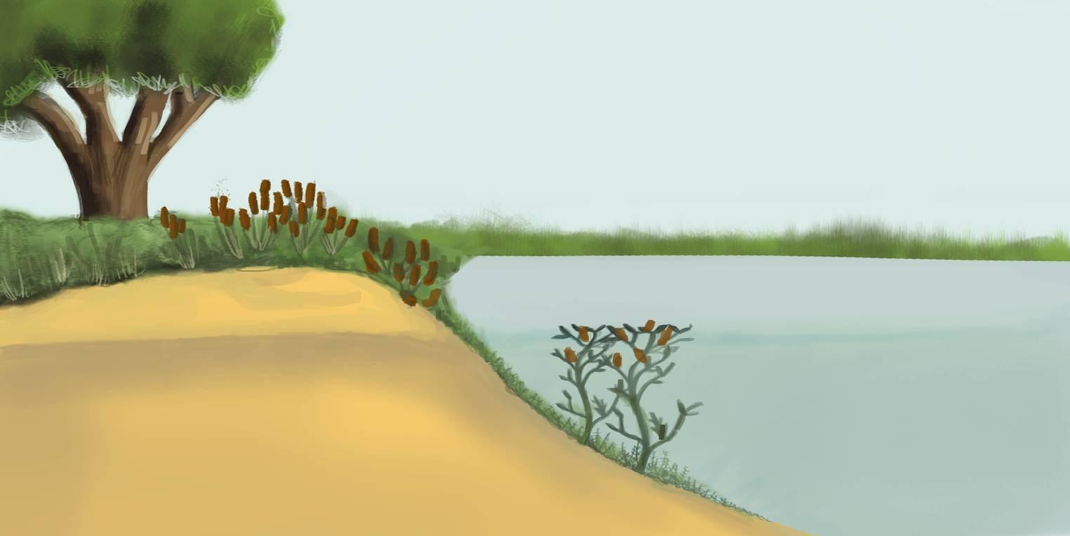 Ökosystem See (Übungen & Arbeitsblätter)