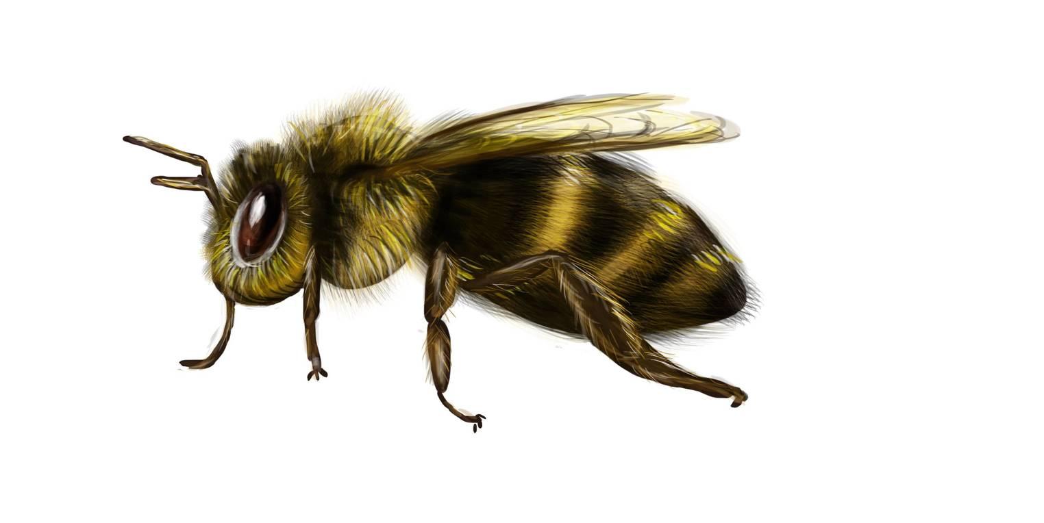 Bau der Insekten (Übungen & Arbeitsblätter)