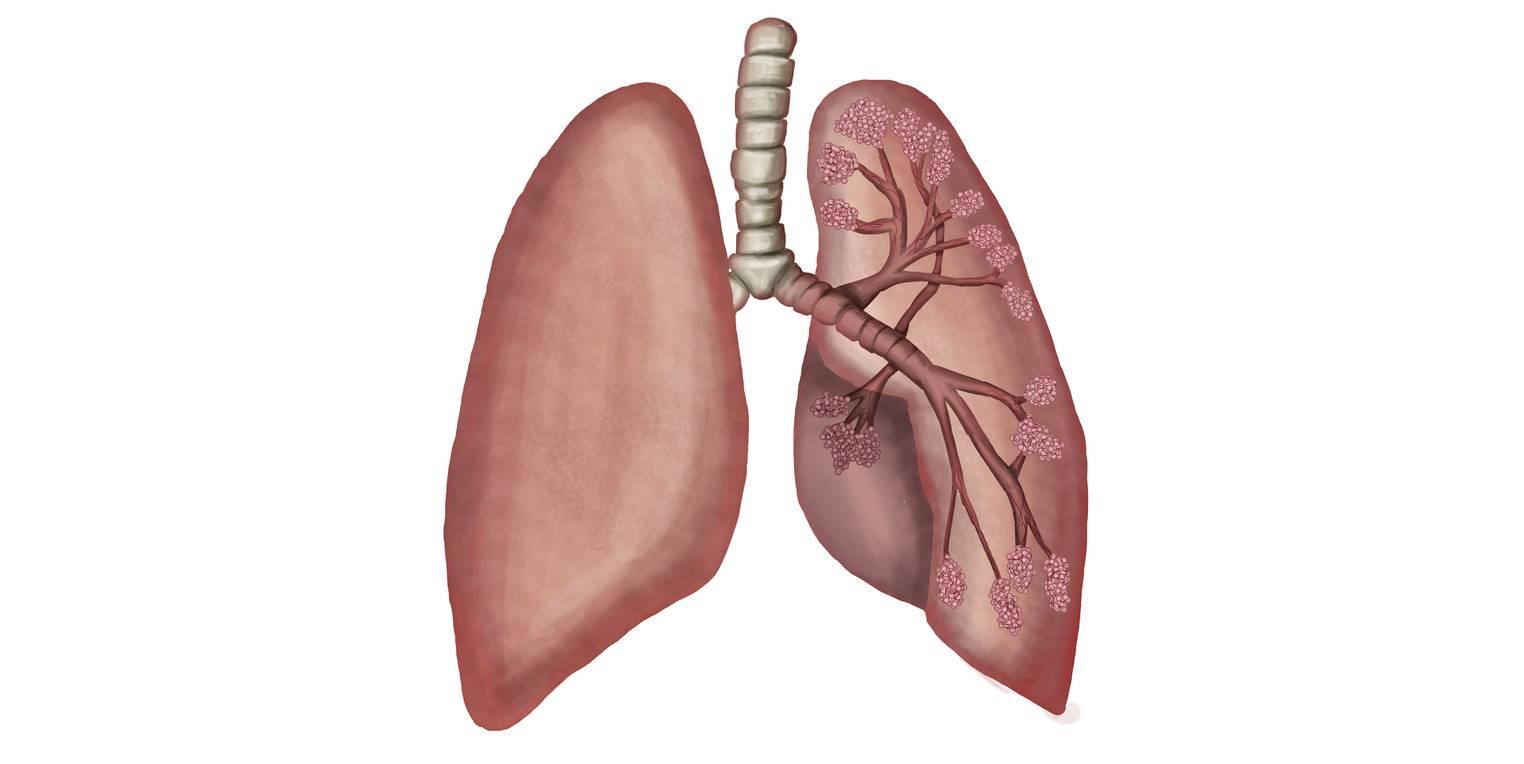 Atmungsorgane des Menschen (Übungen & Arbeitsblätter)