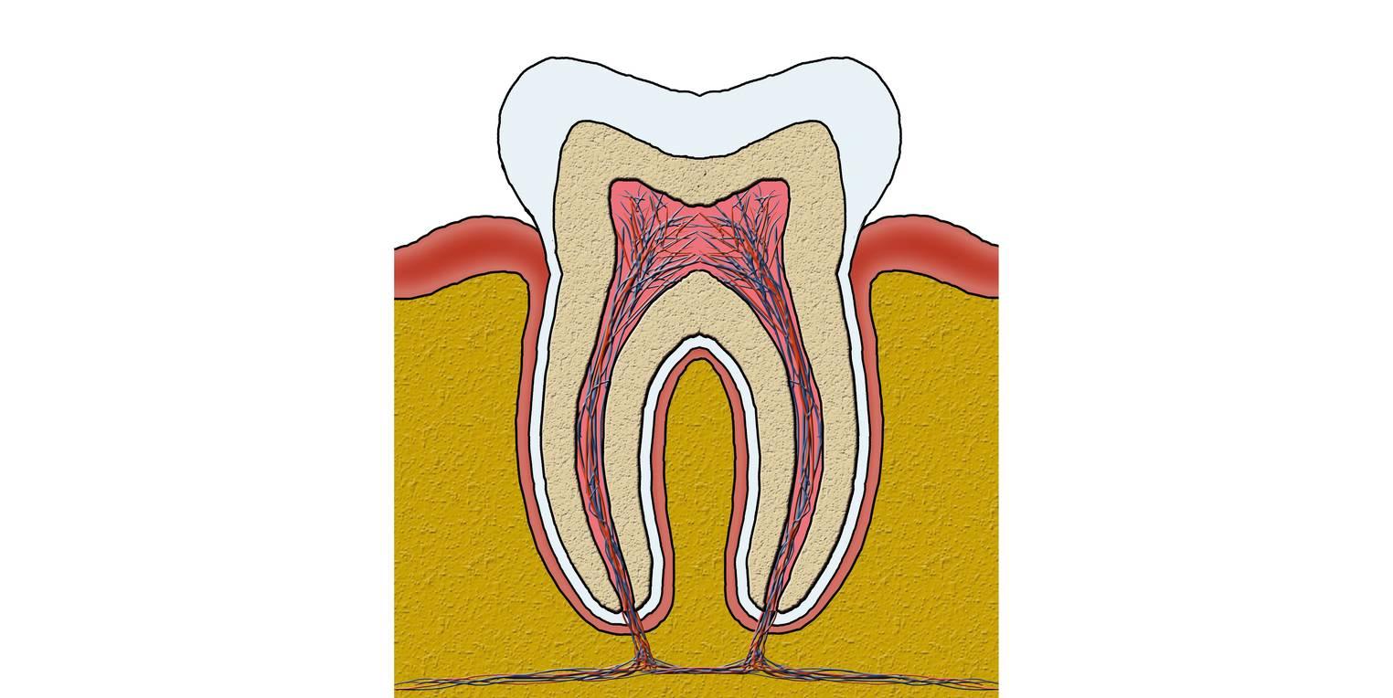 Gesunde Zähne (Übungen & Arbeitsblätter)