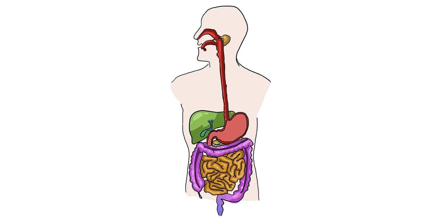 Verdauung und Enzymwirkung (Übungen & Arbeitsblätter)