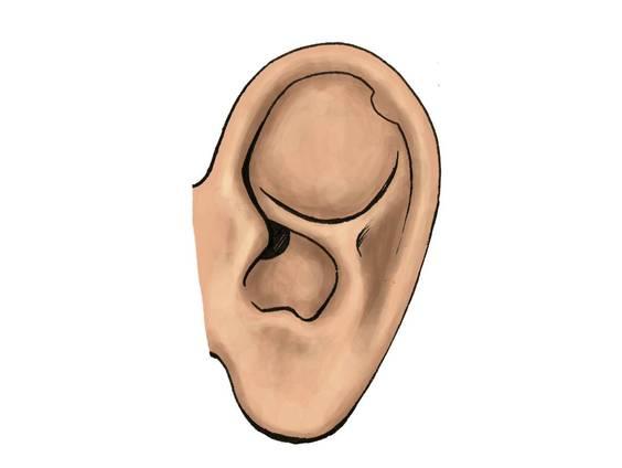 Das Ohr – Schall und Frequenz (Übungen & Arbeitsblätter)