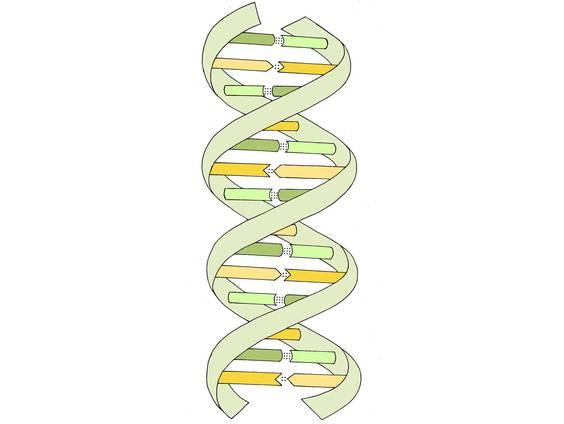 Wie ist die DNA aufgebaut? (Übungen & Arbeitsblätter)