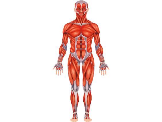 Mein Körper - Körperteile, Muskeln und Knochen (Übungen ...