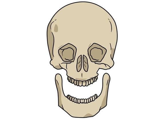 Skelett des Menschen (Übungen & Arbeitsblätter)